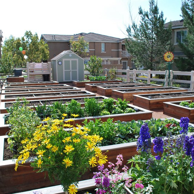 Homecoming at Terra Vista Apartments - Community garden